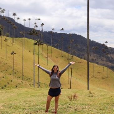 Wax palm valley